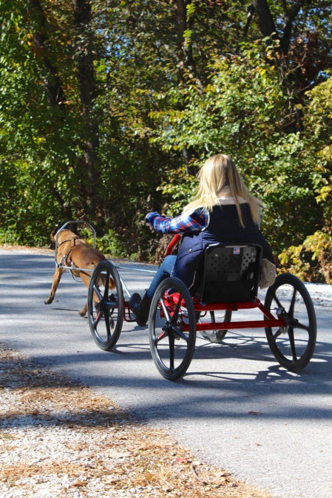 Sacco Dog Carts | Alpha Dog Training Center
